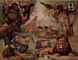 773px-NSRW_African_Animals